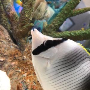 たまには心にも涼しさを。水族館に行ってきました(地元の)