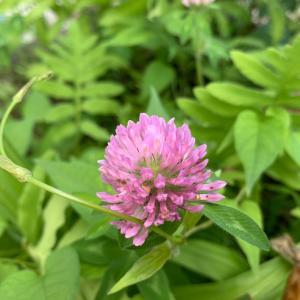 アスファルトに咲く花のように、すべての命が強く生きられるわけじゃないから。