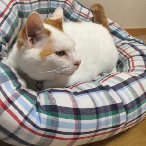 今日は猫の、のんちゃんの命日。優しさと寄り添う愛を教えてくれたね、溢れる思いをありがとう。