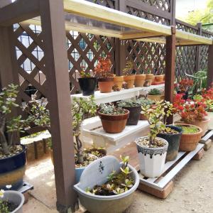 植木鉢を並べました