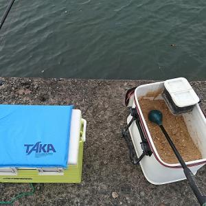浜名湖紀州釣り 小型ですが良く釣れました