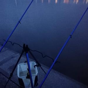 浜名湖に注ぐ川でウナギ釣り まずまずサイズ☆