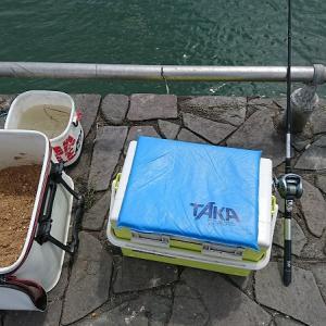 新居海釣り公園で久々のチヌ
