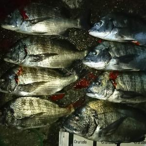 浜名湖ウキダンゴ 爆釣