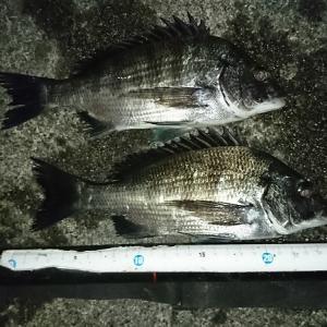 浜名湖ウキダンゴ 今回は小型のみ