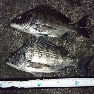 浜名湖ウキダンゴ 小型だけど久々の釣果
