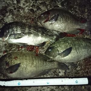 浜名湖ウキダンゴ ようやく夜釣りでも釣果が