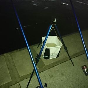浜名湖ウナギ釣り 小型だけでした