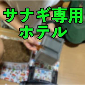 【人工蛹室】サナギのへやを使ってみた【生きた教材】