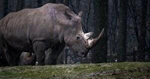 未確認生物 アフリカ