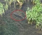 テツブログ16日目、創成川の鯉・税金・nanaco