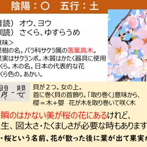 名前に使いたくない漢字「櫻・桜」の意味