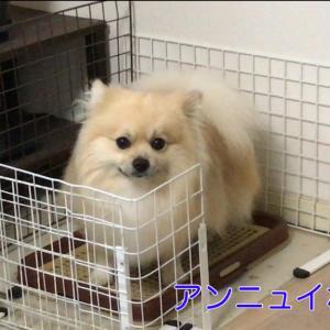 おトイレ、その後に。 犬の習性