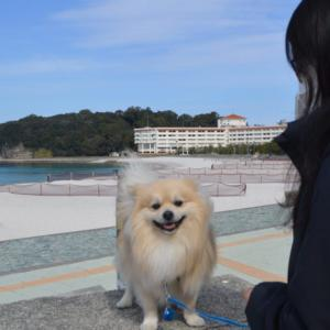 犬と泊まれるお宿『ベイリリィ』がとってもリーズナブル そして親切