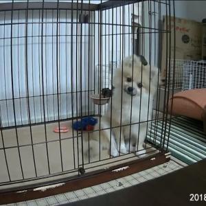 犬を盗撮してみた。