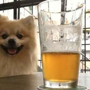 犬と一緒にクラフトビール