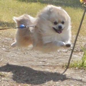 飛行犬を手軽に撮る方法。