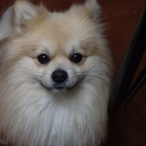 DVを目撃してしまった犬。