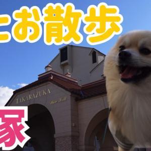 宝塚で優雅にお散歩!映える写真が撮れる!?花乃みち