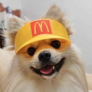 「スマイル0円です」マクドナルド店員になった犬