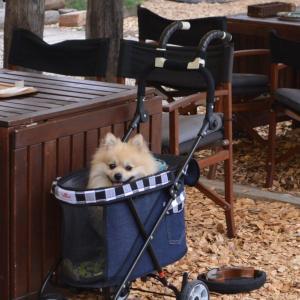 【まとめ】開放感が気持ちいい!涼しい秋に行きたい屋外テラスのあるカフェまとめ