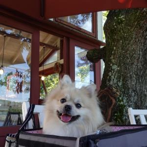 【小野市】ツリーハウスがとってもメルヘン!プラートカフェ