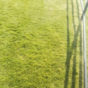 真夏の芝生