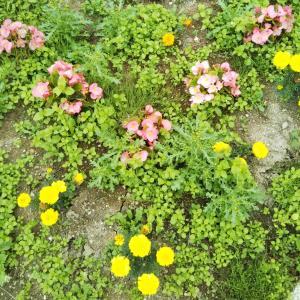 無人駅の花壇