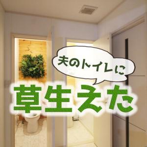 夫のトイレに草生えた!ズボラ向きフェイクグリーンで壁面緑化【デコプラ】で爽やかさをプラス[PR]