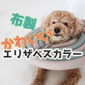 犬猫用おすすめの【エリザベスカラー】布製でデザインもかわいい◎