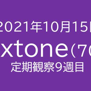 【チャート上抜け?】ネクストーン定期観察【10月15日】