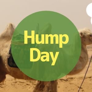 Hump dayの意味は?水曜日がラクダのコブな理由を解説