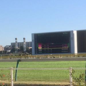 【競馬】いの一番に予想する馬リスト・2020.8.16(日)新潟競馬場