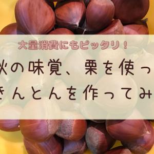 【大量消費】秋の味覚、栗を使って栗きんとんを作ってみた!