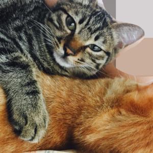 コロナワクチン接種について~ペット探偵さんとネコ捜索しながら思ったこと~