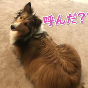 【保存版】犬の年齢を人間で計算した早見表