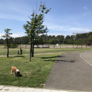 川下公園に散歩。ペットの運動不足には最適な公園でした