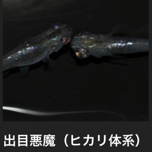 1ペア ¥2,500,000