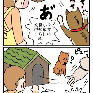 お人好しなのか間抜けなのかわからない愛犬