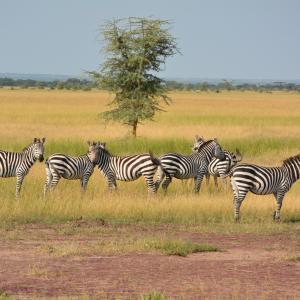 セレンゲティ国立公園(タンザニア)