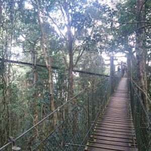 オーストラリアのゴンドワナ雨林(オーストラリア)