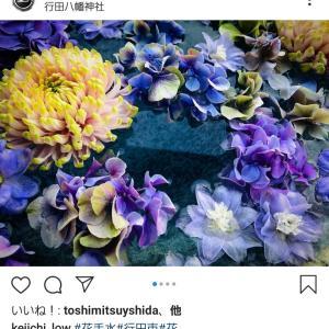 ☆行田八幡神社に朗報☆花手水が展示再開されます!