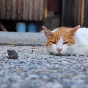 行田市の前玉神社、御朱印の癒し猫が話題。