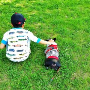 子供が生まれたら犬を飼いなさい