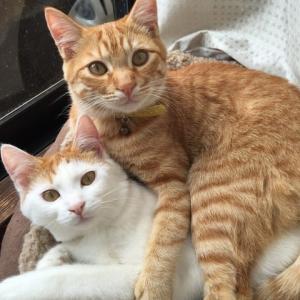 猫の二重唱(Duetto buffo di due gatti)
