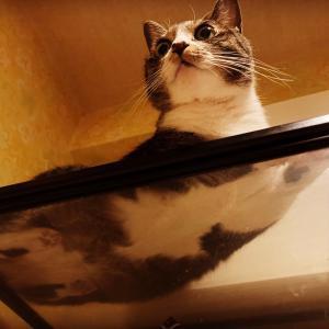 愛猫Kの紹介、の前にその裏側です。