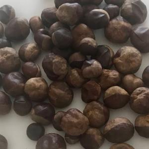 秋です。木の実の季節になりました。It's Autumn. It's the season for nuts.