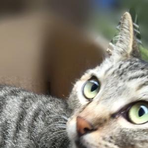 我が家に遊びにくるネコちゃんたち   cats that  visit us from time to time