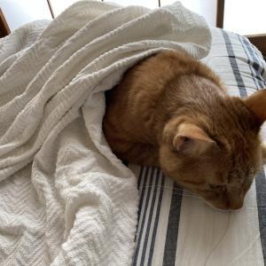 31日目:ネコちゃんのベッドの上での定位置!