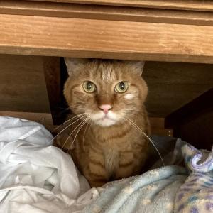32日目:ネコちゃんは押し入れの住人説